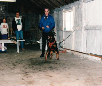 Protedtion dog program for K9s